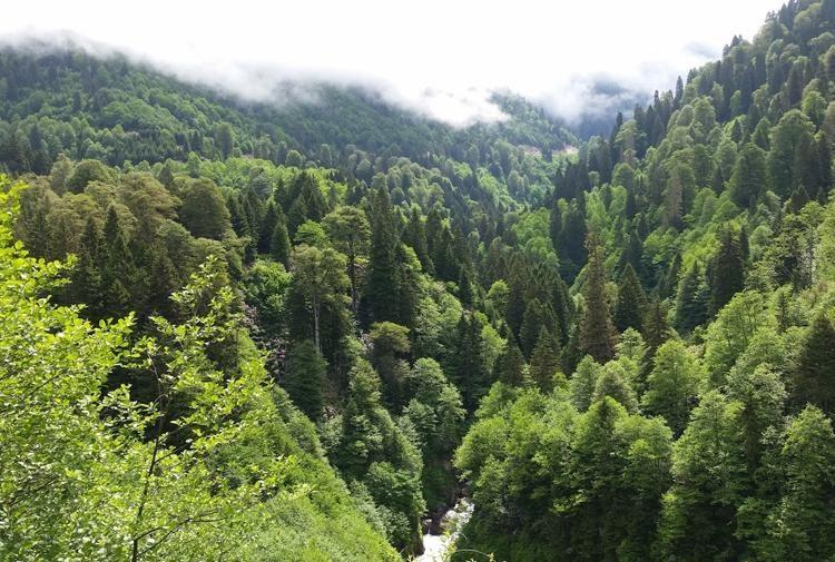 Batı Ermenistan ormanları : Meclis'te kabul edildi: Ormanlar beş yıllığına satışa çıkarılıyor