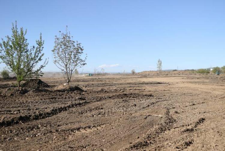 UNESCO'nun uyarılarına rağmen Dicle Vadisi'nde ağaç kıyımı sürüyor