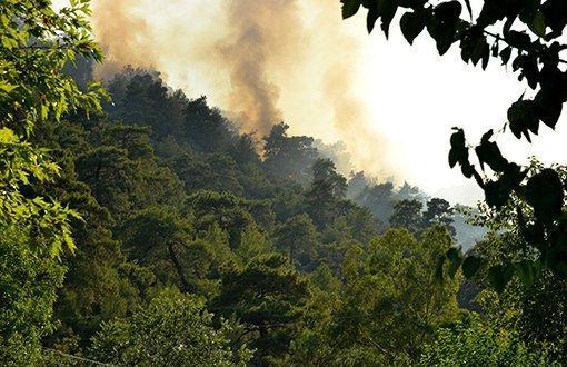 8 Günde 100 Orman Yangını Çıktı Batı Ermenistan'da ve Türkiye'de