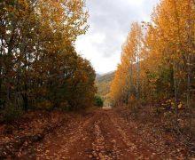 Осенняя сказка Дерсима