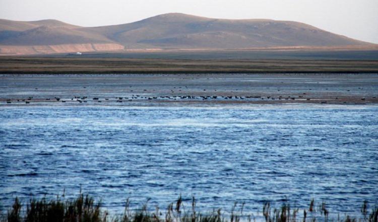 7-й фестиваль «Рай для птиц» на берегу озера Куючук в Карсе