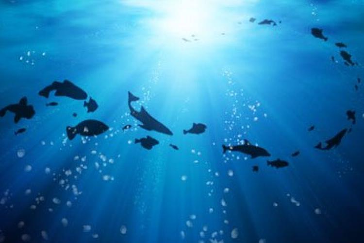 8 июня — Всемирный день океана