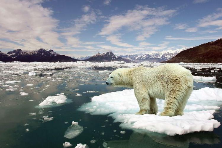 Ученые предложили способ избежать глобальной катастрофы
