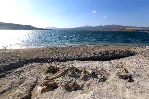 Batı Ermenistan'ın Kesaria şehrinde 7.5 milyon yıllık fosiller bulundu