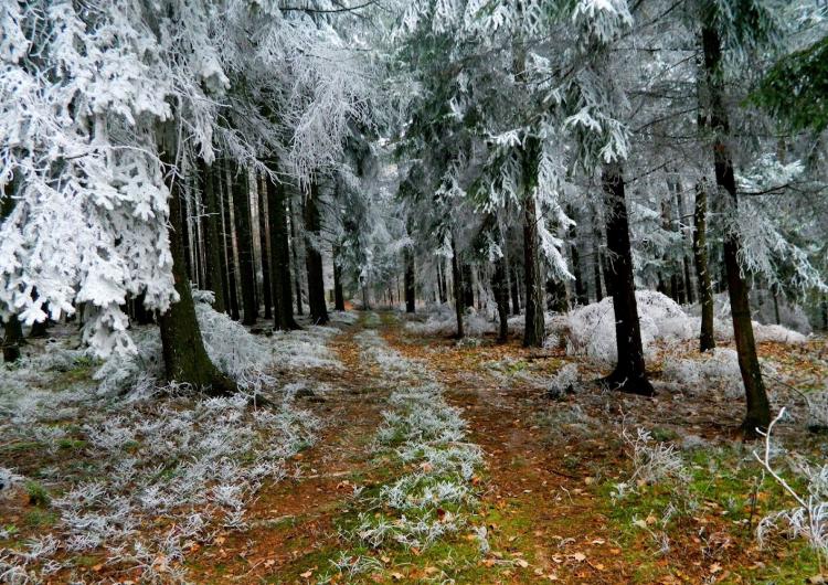Կարսում՝ ցրտի պատճառով բուսականությունը ծածկվել է եղյամով
