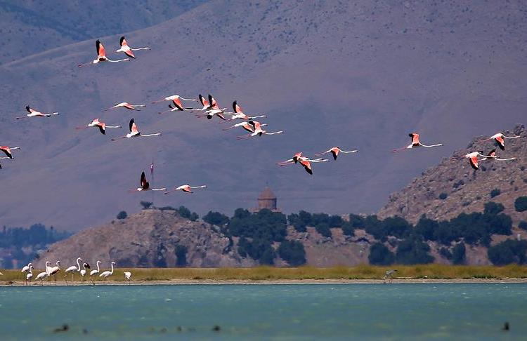 Այս տարի թռչունների փառատոնը տեղի չի ունեցել Արեւմտյան Հայաստանում Վանի նահանգում