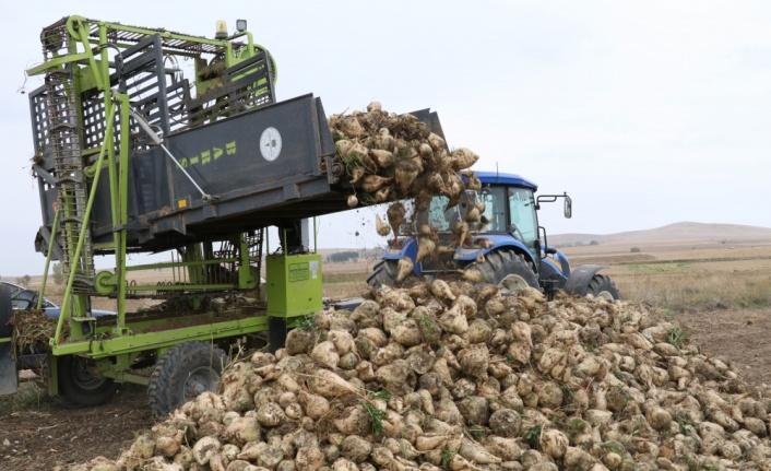 Արեւմտեան Հայաստանի Սեբաստիոյ շրջանին սկսեր է շաքարի ճակնդեղի բերքահաւաքը