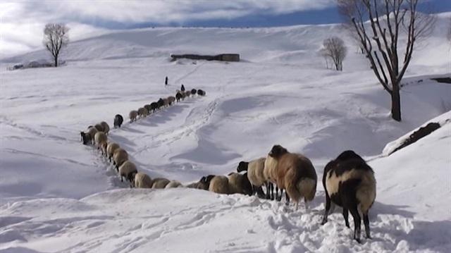 Batı Ermenistan'ın Muş ilinin Varto ilçesinde yoğun kar yağışı nedeniyle 20 köy yolu ulaşıma kapandı