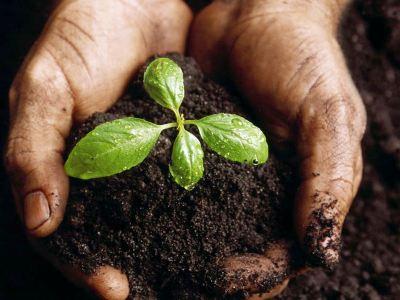Armenia Tree Project. «25 տարուայ ընթացքին 6 միլիոն ծառ տնկեցինք Հայաստանի մէջ»