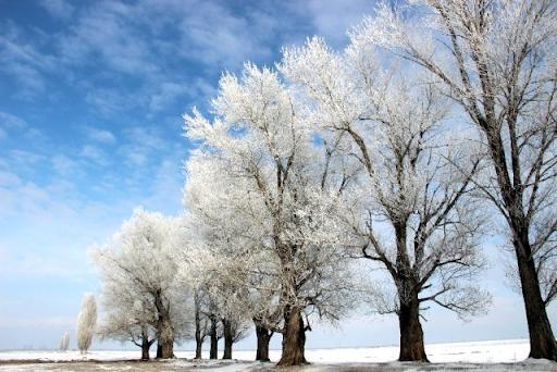 Կարինում Արևմտյան Հայաստան, ծառերի վրա նստած եղյամը անասելի գեղեցիկ տեսարան է ստեղծել