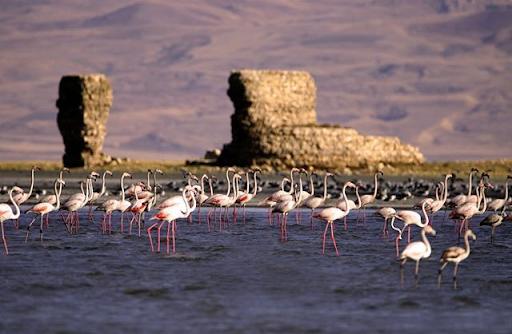 Flamingoların Batı Ermenistan'ın Van Gölü kıyılarındaki görsel şöleni başladı
