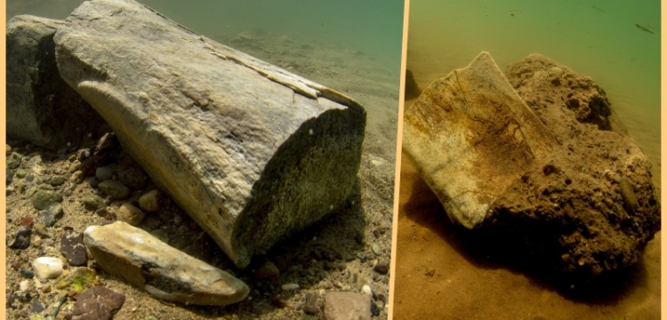 In Kesaria, 7.5 million-year-old fossils were extracted from the bottom of reservoir