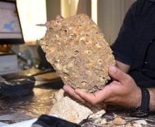В Муше были найдены окаменелости, возрастом  50 миллионов лет