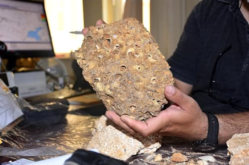 Fossils of 50 million years found in Mush