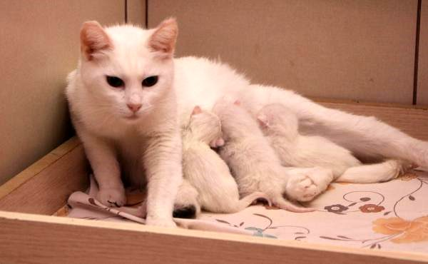 Van cats gave birth to the last kittens of 2020