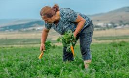 (Eastern Armenian) Էրզրումից՝ Ջավախք. ձեռքերով մշակված «փուրչուլուղը»